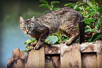 lagen om tillsyn av katter